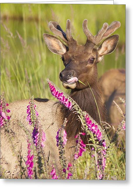 Greeting Card featuring the photograph Grazing At Dusk - Cropped by Todd Kreuter