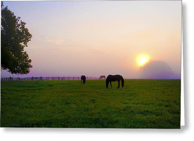 Grazing At Sunrise Greeting Card by Bill Cannon