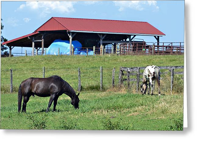 Grazing Below The Shed Greeting Card by Susan Leggett