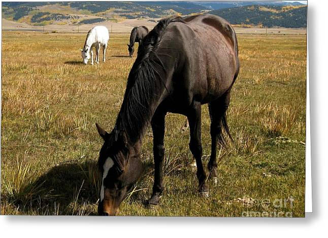 Grazing Buddies Greeting Card by Claudette Bujold-Poirier