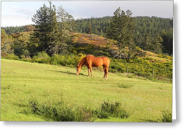 Greeting Card featuring the photograph Grazing by Cheryl Hoyle
