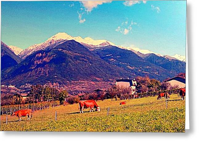 Grazing Cows 2 Greeting Card by Giuseppe Epifani