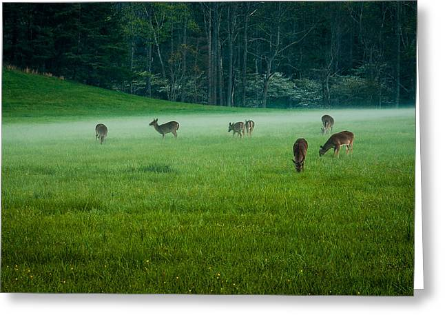 Grazing Deer Greeting Card