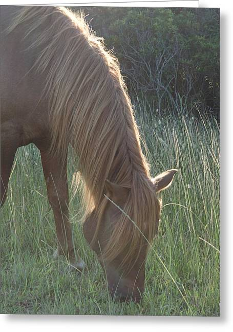 Grazing Horse Greeting Card by Nancy Edwards