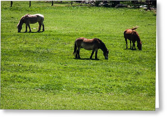 Greeting Card featuring the photograph Grazing Horses by Jay Stockhaus