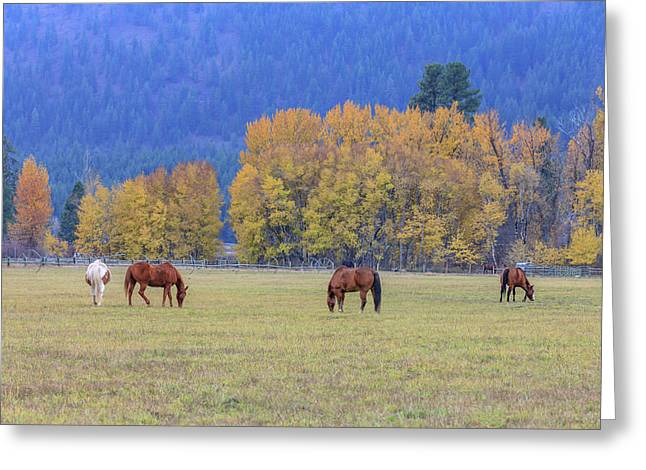 Grazing Horses Winthrop Western Greeting Card by Tom Norring