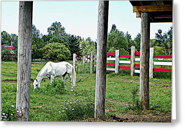 Grazing In The Meadow Greeting Card by Dianne  Lacourciere