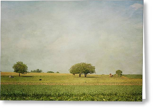 Grazing Greeting Card by Kim Hojnacki