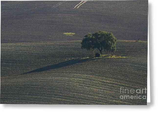 Grazing Land In Andalusia-1 Greeting Card by Heiko Koehrer-Wagner