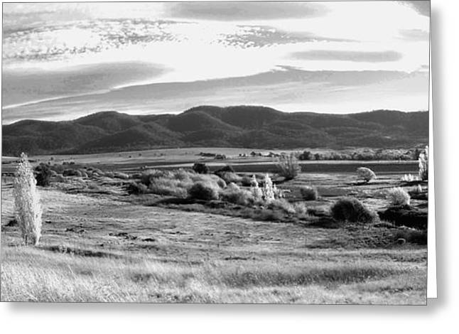Grazing Land Near Goulburn In New South Wales Greeting Card