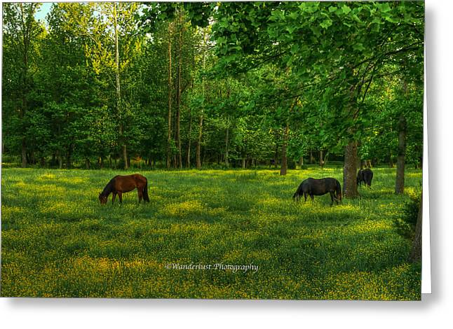Grazing Greeting Card by Paul Herrmann