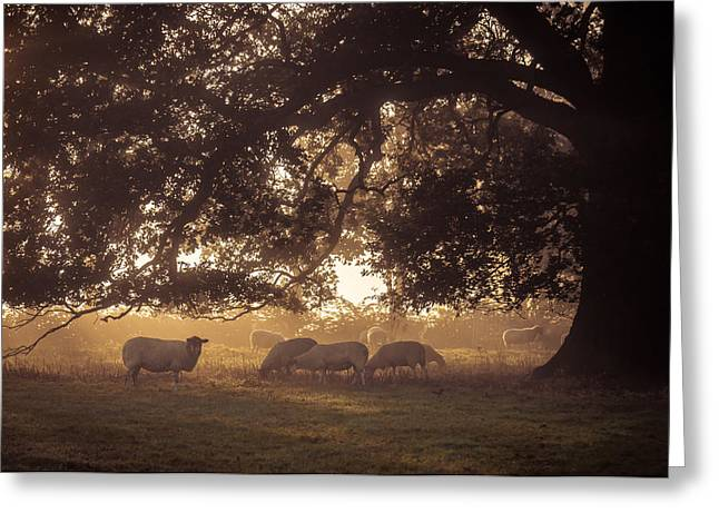 Grazing Under The Tree Greeting Card by Chris Fletcher