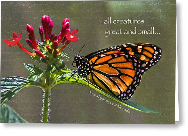 Great And Small Greeting Card by Karen Stephenson