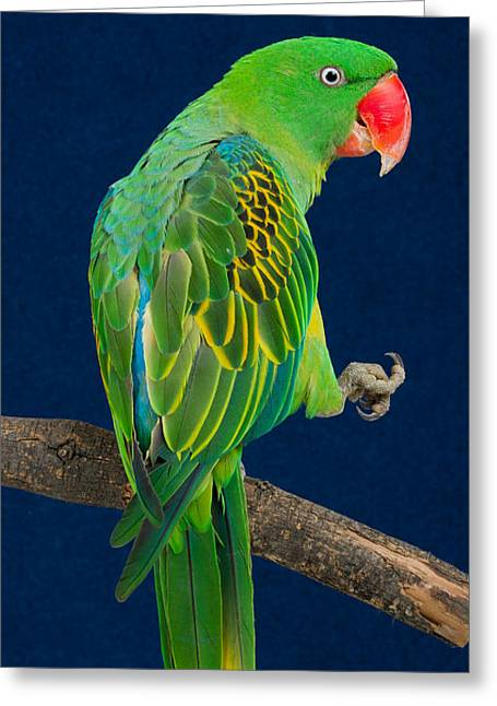 Great-billed Parrot 1 Greeting Card