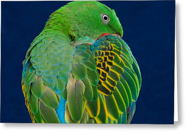 Great-billed Parrot 2 Greeting Card