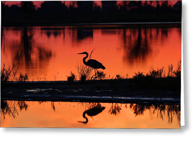 Great Blue Heron At Sunrise Greeting Card by Allan Levin