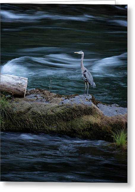 Greeting Card featuring the photograph Great Blue Heron by Belinda Greb
