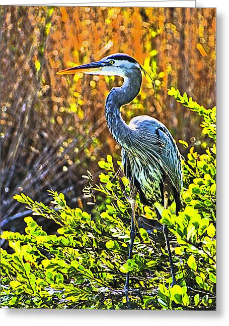 Great Blue Heron Greeting Card by Dennis Cox WorldViews