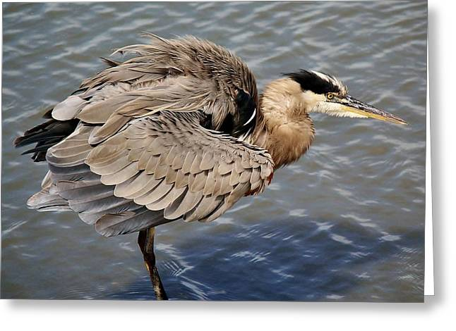 Great Blue Heron Feathers - # 24 Greeting Card by Paulette Thomas