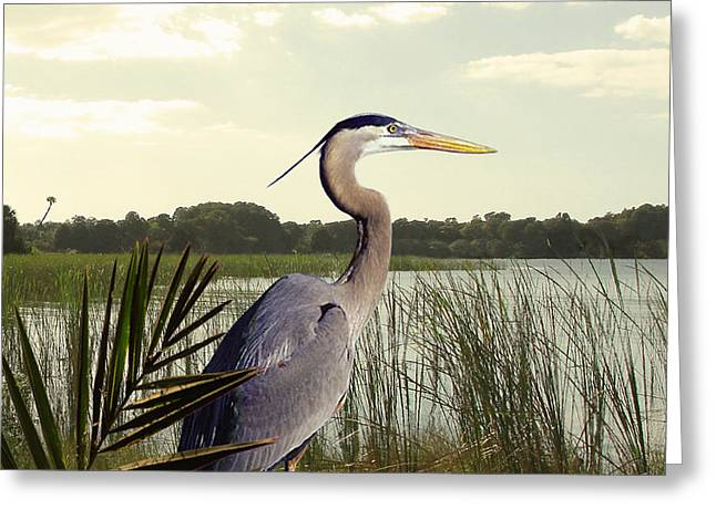 Great Blue Heron In The Bulrushes Greeting Card