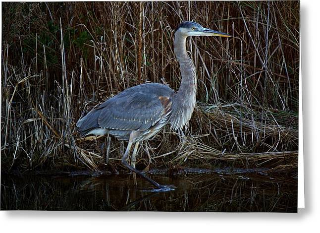 Great Blue Heron In The Marsh - #1 Greeting Card by Paulette Thomas