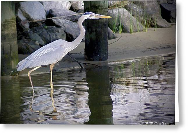 Great Blue Heron - Mealtime Greeting Card by Brian Wallace