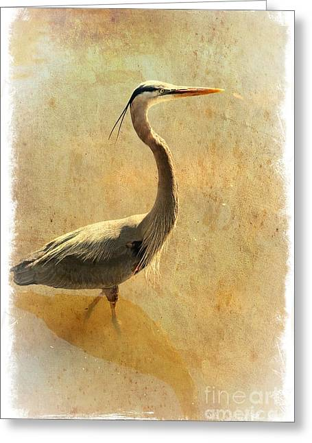 Great Blue Heron Mystique Greeting Card