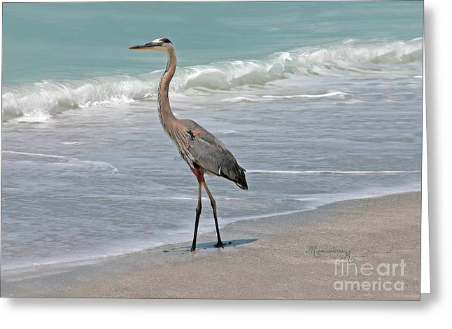 Great Blue Heron On Beach Greeting Card by Mariarosa Rockefeller