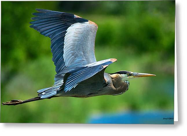 Great Blue Heron On The Platte Greeting Card by Stephen  Johnson