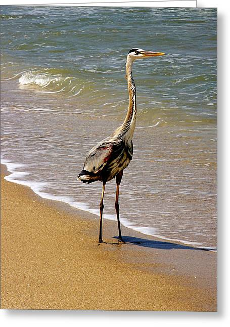 Great Blue Heron On The Surf. Greeting Card
