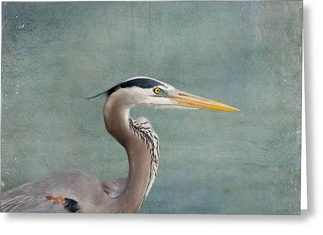 Great Blue Heron - Profile Greeting Card by Kim Hojnacki
