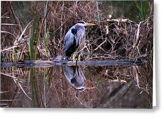 Great Blue Heron Reflecting Greeting Card by Gene Chauvin