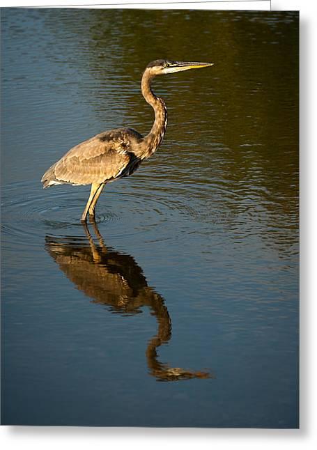Great Blue Heron Reflection Greeting Card by  Onyonet Photo Studios