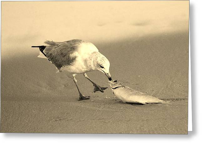 Greeting Card featuring the photograph Great Catch With Fish by Cynthia Guinn