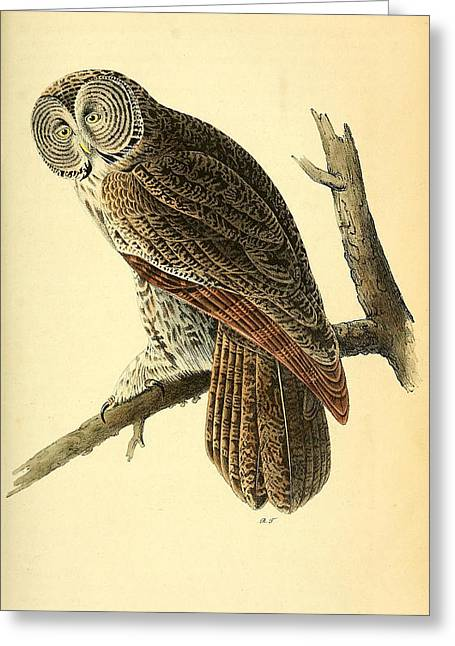Great Cinerous Owl Greeting Card by Philip Ralley