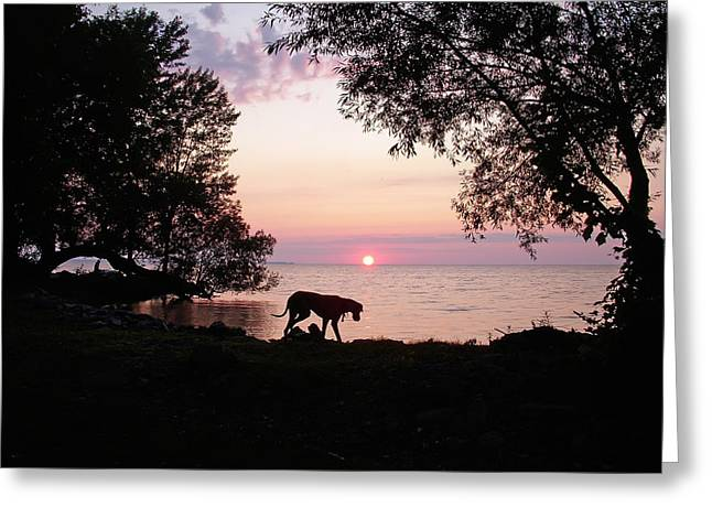 Great Dane Sunset Greeting Card by Aimee L Maher Photography and Art Visit ALMGallerydotcom