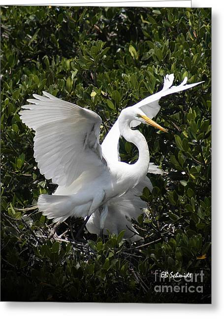 Great Egret 03 Greeting Card