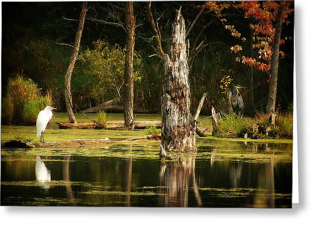 Great Egret And Great Blue Heron Greeting Card by Scott Hovind