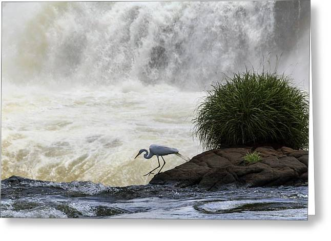 Great Egret At Iguazu Falls Greeting Card by Alfred Pasieka