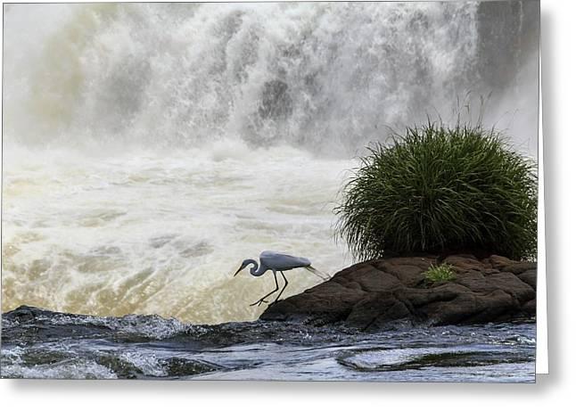 Great Egret At Iguazu Falls Greeting Card