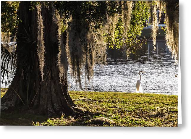 Great Egret At The Lake Greeting Card by Zina Stromberg