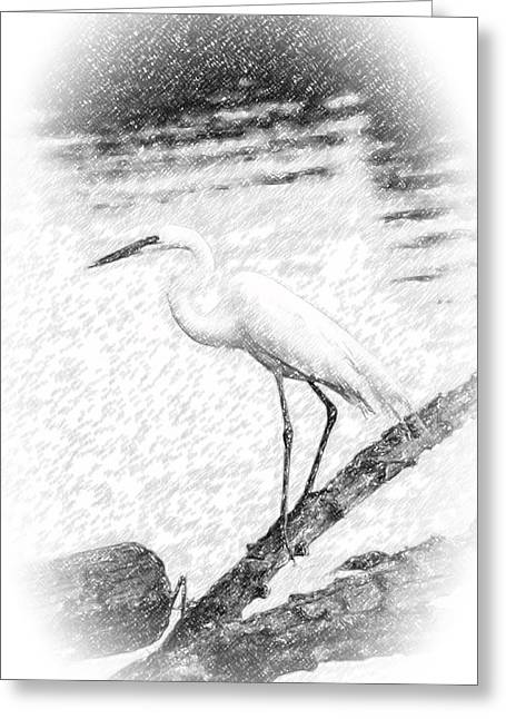 Great Egret Fishing Pencil Sketch Greeting Card