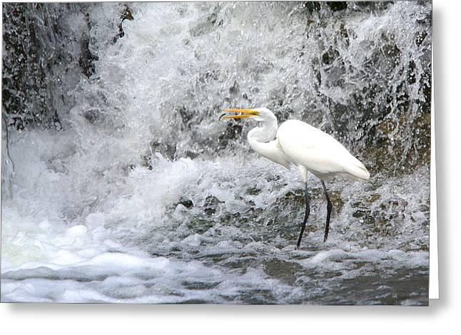 Great Egret Hunting At Waterfall Series 1 Greeting Card