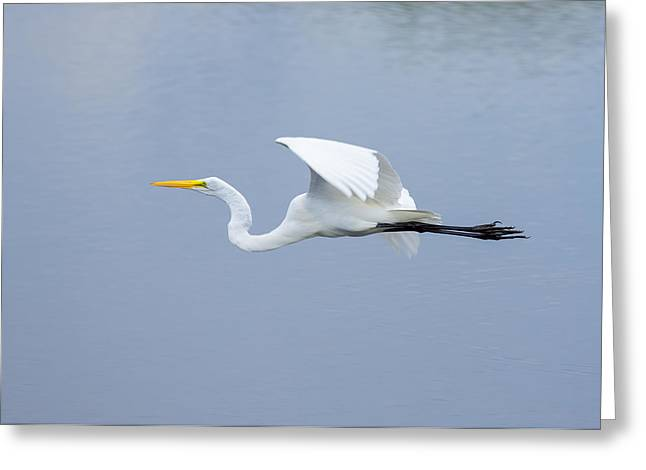 Greeting Card featuring the photograph Great Egret In Flight by John M Bailey