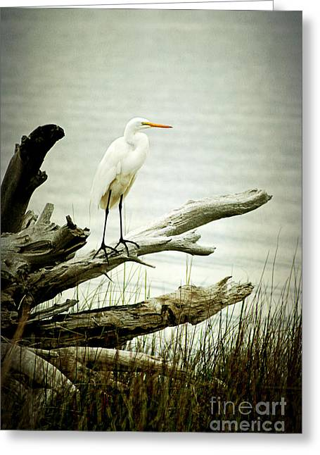 Great Egret On A Fallen Tree Greeting Card