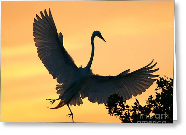 Greeting Card featuring the photograph  Sunset Ballet by John F Tsumas