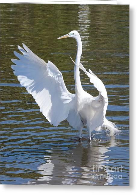 Great Egret Symphony Greeting Card by Carol Groenen