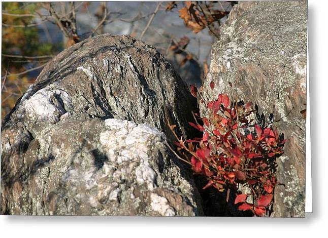 Great Falls Va - 121230 Greeting Card by DC Photographer