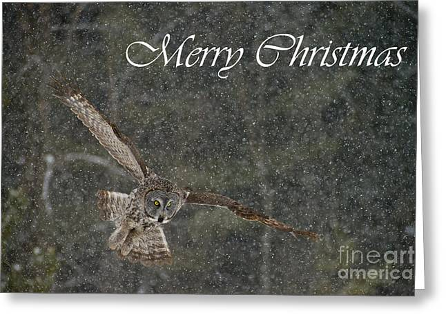 Great Gray Owl Christmas Card 8 Greeting Card by Michael Cummings