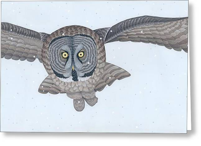 Great Gray Owl Greeting Card by Nathan Marcy